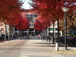 Samhällsvetenskpliga fakulteten, Sprängkullsgatan 19